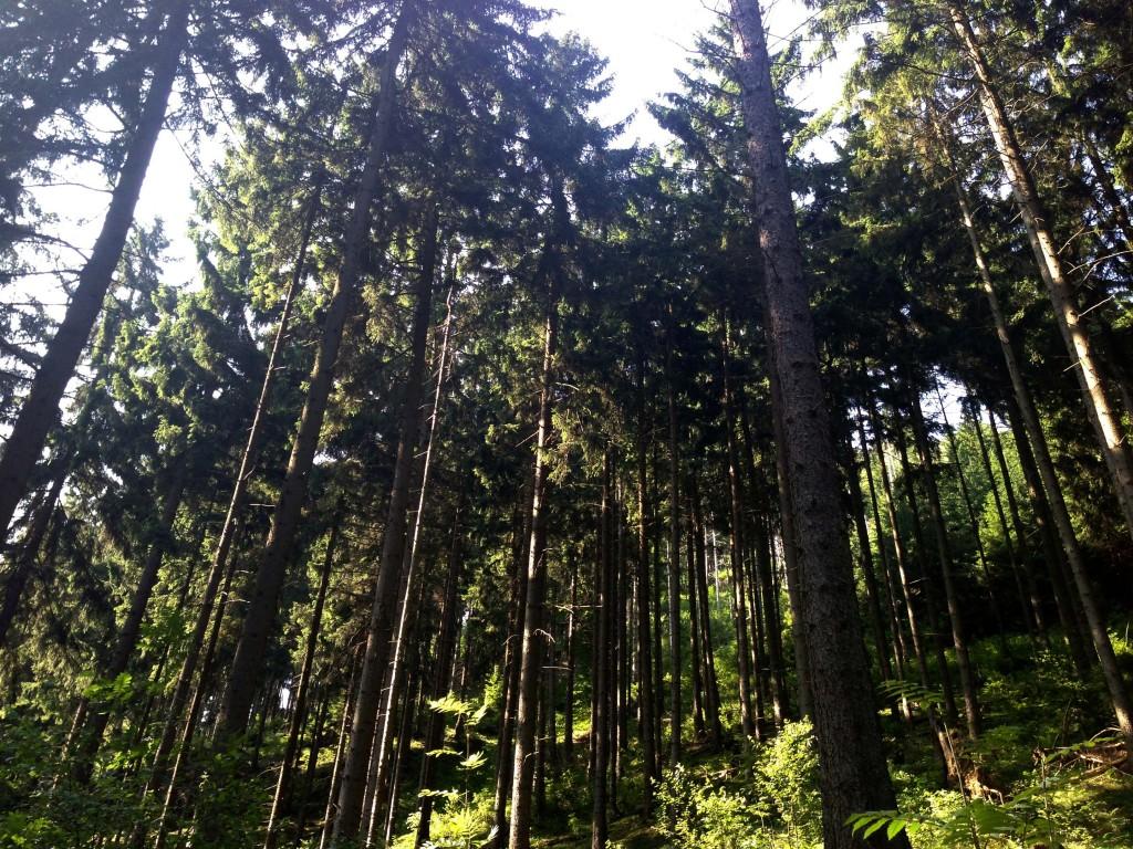 Okertal Harz